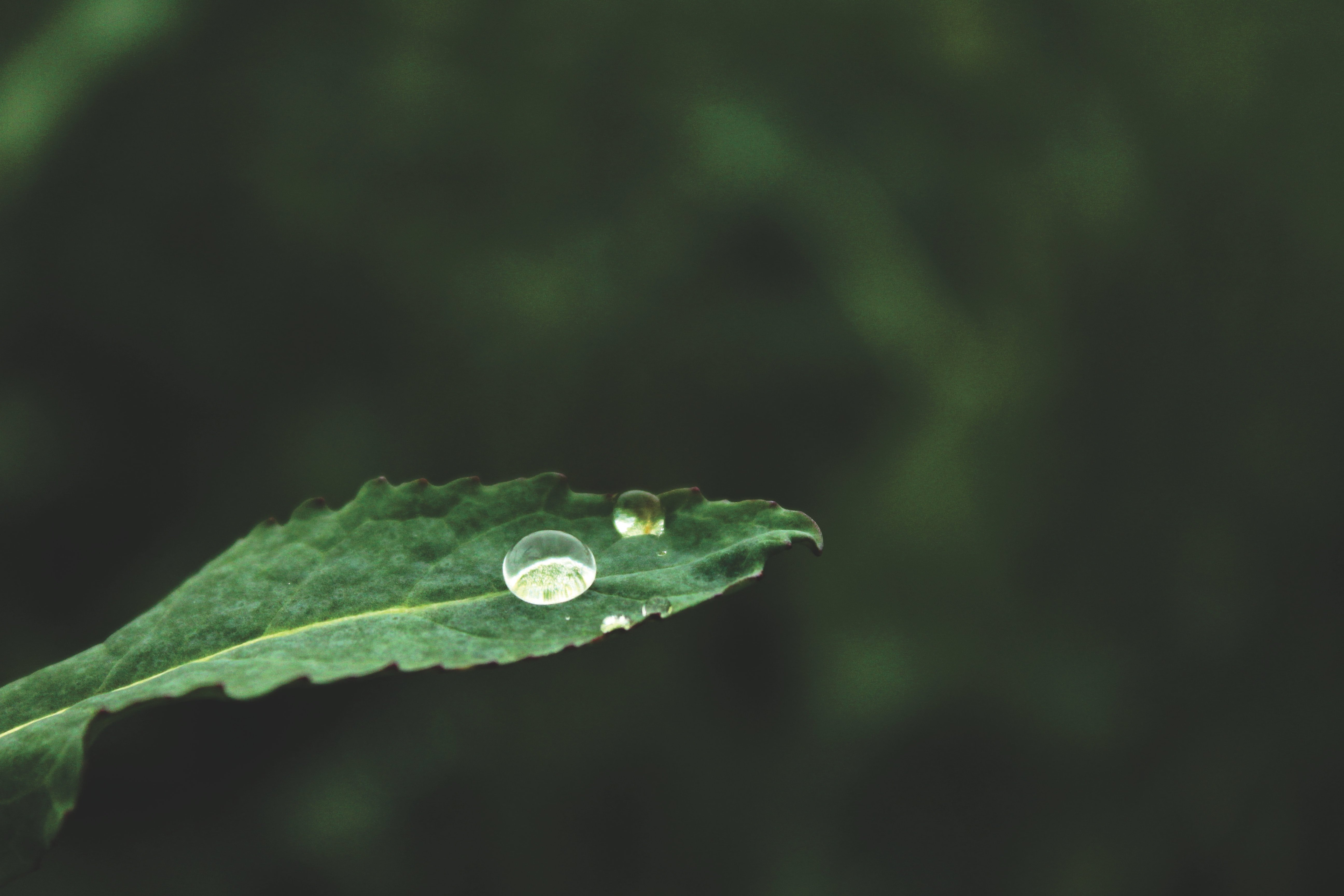 Leaf with drop of water